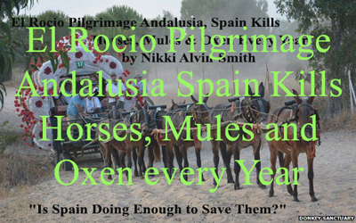 El Rocio Pilgrimage Andalusia Spain Kills Horses, Mules and Oxen every Year