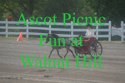 Ascot Picnic Fun at Walnut Hill