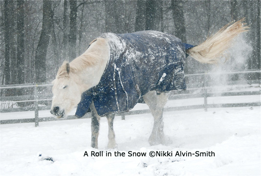 A Roll in the Snow