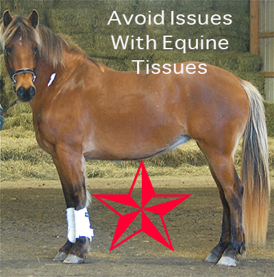 Avoid Issues With Equine Tissues