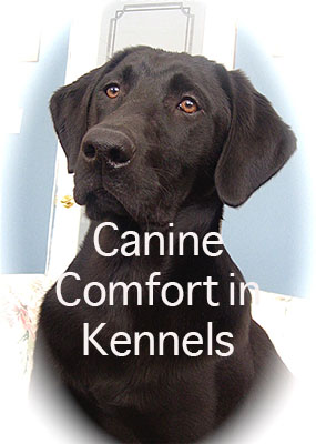 Canine Comfort in Kennels